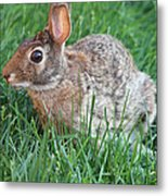 Rabbit On The Run Metal Print