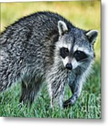 Raccoon Buddy Metal Print