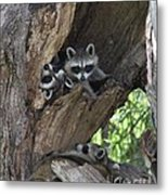 Raccoon Family Time Metal Print