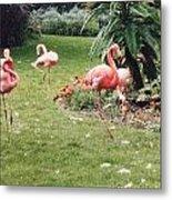 Racing Flamingos Metal Print