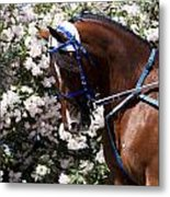 Racing Horse  Metal Print