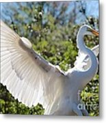 Radiant Great Egret Metal Print