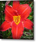 Radiant In Red - Daylily Metal Print