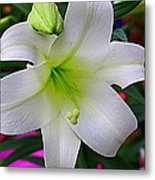 Radiant In White - Lily Metal Print