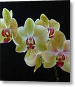 Radiant Orchid Metal Print