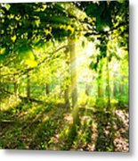 Radiant Sunlight Through The Trees Metal Print