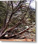Ragged Point Tree Metal Print