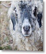 Raggedy Goat Metal Print