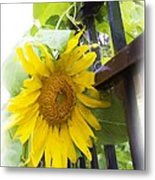 Railed Sunflower Metal Print