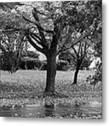 Rain And Leaf Ave In Black And White Metal Print