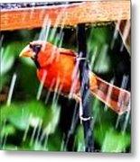 Rain Bird Metal Print