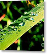 Rain Blade Metal Print