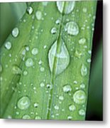 Rain Drops Metal Print