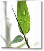 Rain Drops On Bamboo Leaves Metal Print