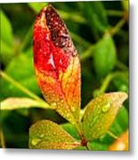 Rain Drops On Colorful Leaf Metal Print