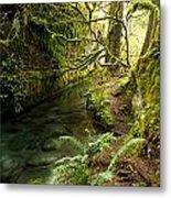 Rain Forest 2 Metal Print
