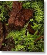 Rain Forest Abstract Metal Print