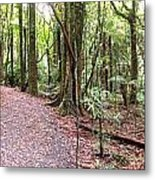 Rain Forest Metal Print by Les Cunliffe