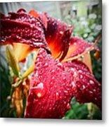 Rain Kissed Lilly Profile 2 Metal Print