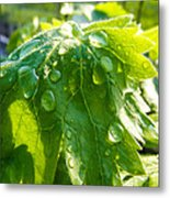 Rain Soaked Leaf Metal Print