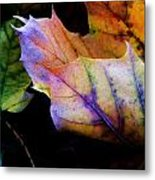 Rainbow Autumn Metal Print