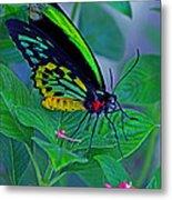 Rainbow Butterfly Metal Print