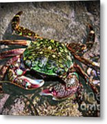 Rainbow Crab Metal Print