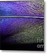 Rainbow Feather Metal Print