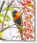 Rainbow Lorikeet In Flame Tree Metal Print