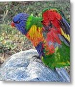 Rainbow Lorikeet Metal Print