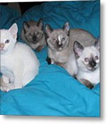Rainbow Of Kittens Metal Print