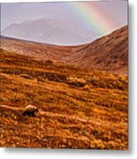 Rainbow Over Grizzly In Denali Metal Print