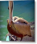 Rainbow Pelican Metal Print by Karen Wiles