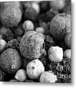 Rainbow Peppercorn Macro Black And White Metal Print