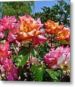Rainbow Sorbet Roses Metal Print by Denise Mazzocco