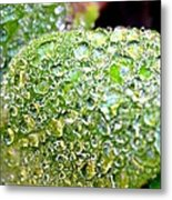 Lambs Ear Raindrops Metal Print by Candice Trimble