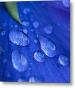 Raindrop Pansy Metal Print by Anne Gilbert