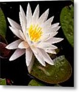 Raindrop Water Lilly Metal Print