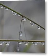 Raindrops Clinging To Grass Stems Metal Print