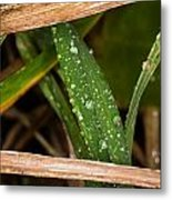 Raindrops In The Grass Metal Print