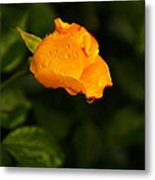Raindrops On A Yellow Rose Metal Print