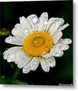 Raindrops On Daisy Metal Print
