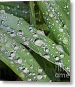 Raindrops On Daylily Leaves Metal Print