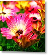 Raindrops On Flower Metal Print