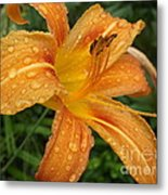 Raindrops On Golden Lily Metal Print