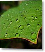 Raindrops On Plumeria Leaf Metal Print