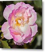 Raindrops On Rose Petals Metal Print