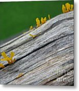 Rainforest Blooms Metal Print