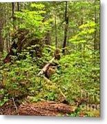 Rainforest Green Everywhere Metal Print