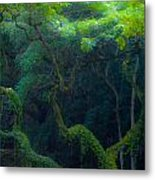 Rainforest In Waimea Valley Too Metal Print